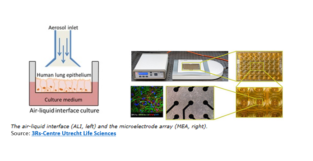 The air-liquid interface and the microelectrode array (MEA)